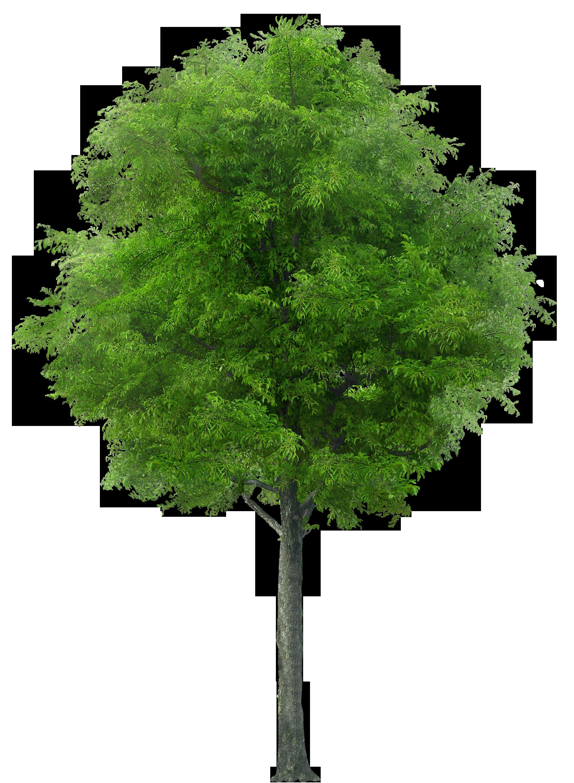 Фото дерев для дітей 10 фотография