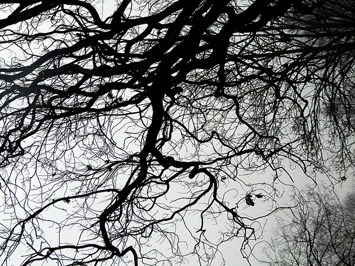 BRANCHES & TREES: