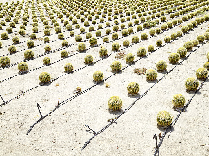 The New Social: Henrik Spohler, Cactus Farm(Kakteenzucht) in Borrego Springs, USA, 2011 from the Series The Third Day © Henrik Spohler. 6th Triennale of Photography Hamburg.