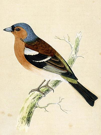 penccil: John James Audubon