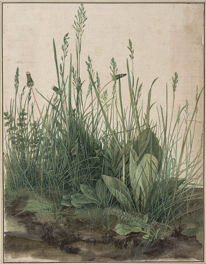 Dürer - Observer of Nature: The Large Piece of Turf, 1503, watercolour and bodycolour, heightened with white, mounted on card, 40.3 x 31.1 cm, Albertina, Vienna. Photograph: Albertina, Vienna