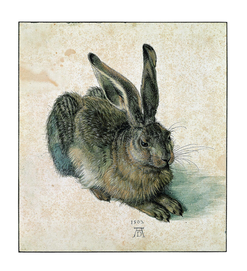 Dürer - Observer of Nature: Hare, 1502, watercolour and bodycolour, heightened with white, traces of an underdrawing at the right ear, 25 x 22.5 cm, Albertina, Vienna Photograph: Albertina, Vienna