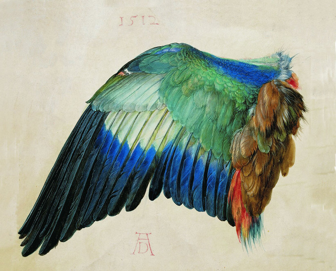 Dürer - Observer of Nature: Wing of a Blue Roller, c. 1500 (or 1512),  watercolour and bodycolour on parchment, heightened with white, 19.6 x 20 cm, Albertina, Vienna. Photograph: Albertina, Vienna