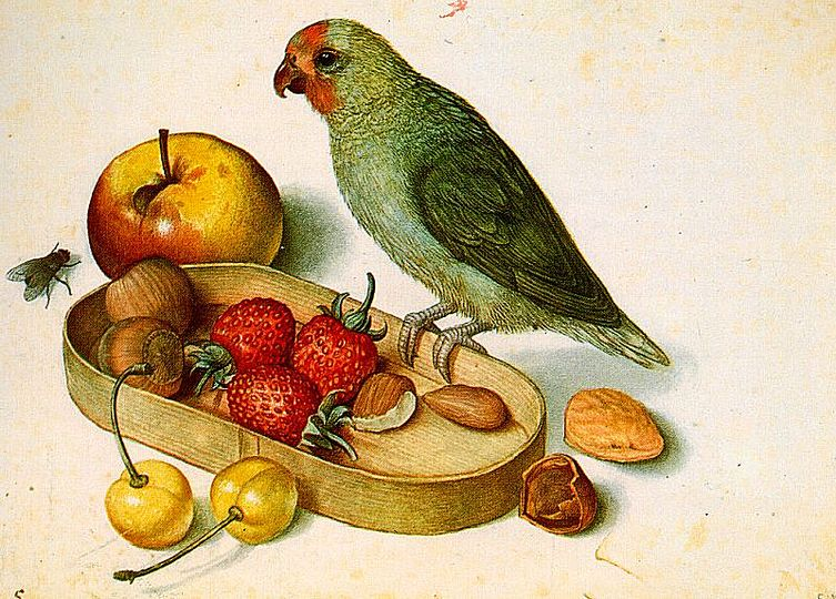 Georg Flegel: Still Life Painter: Still life with Pygmy Parrot